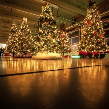 Six million Christmas trees sold in UK annually